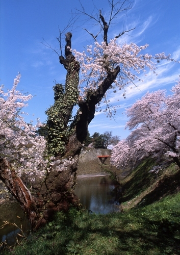 FWaizuwakamatsuRG015(1).jpg