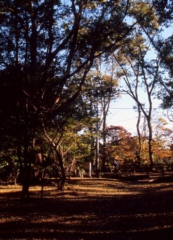 FWamusashinoRG115(2).jpg