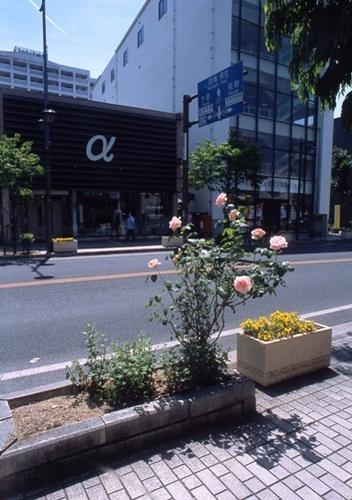 FWashikagaRG158(1).jpg