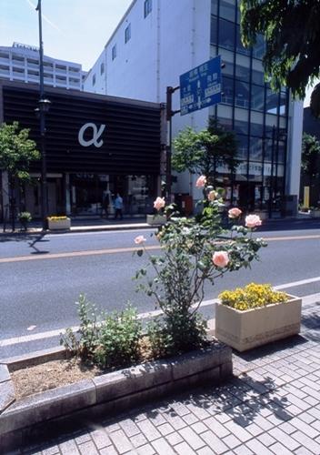 FWashikagaRG158(2).jpg