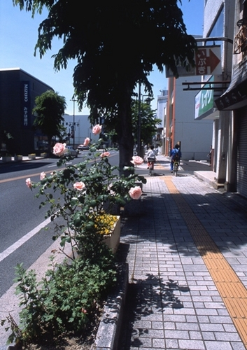 FWashikagaRG159(1).jpg