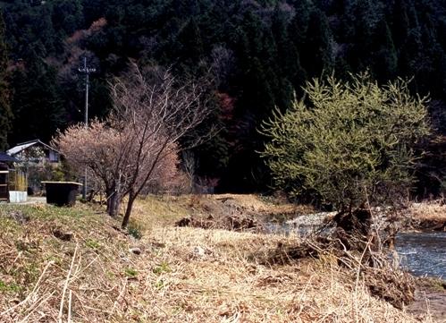 FWkyotoRG327(1).jpg