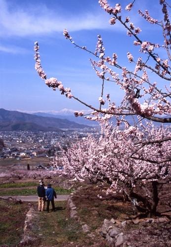 FWmatsushiroRG059(1).jpg