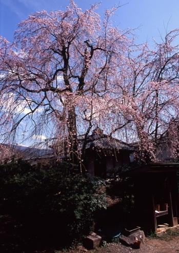 FWmatsushiroRG096(1).jpg