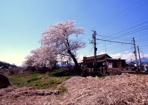 FWmatsushiroRG251(1).jpg