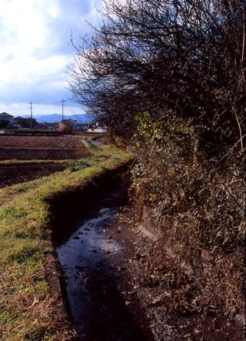 FWmusashinoRG033(1).jpg