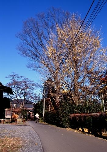FWmusashinoRG068(1).jpg