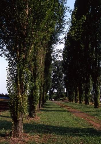 FWmusashinoRG158(1).jpg