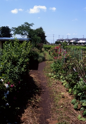 FWmusashinoRG195(1).jpg