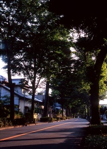 FWmusashinoRG205(1).jpg