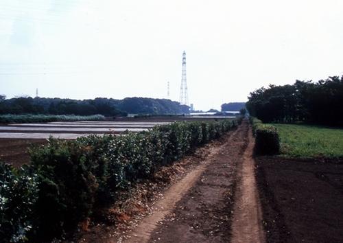 FWmusashinoRG260(1).jpg