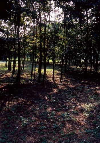 FWmusashinoRG261(1).jpg