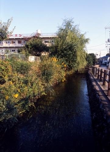 FWmusashinoRG328(1).jpg