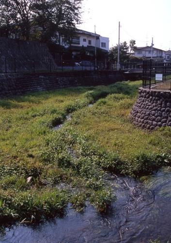 FWmusashinoRG349(1).jpg