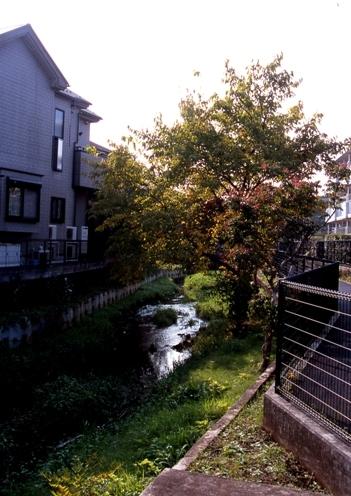 FWmusashinoRG355(2).jpg