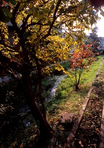 FWmusashinoRG357(1).jpg