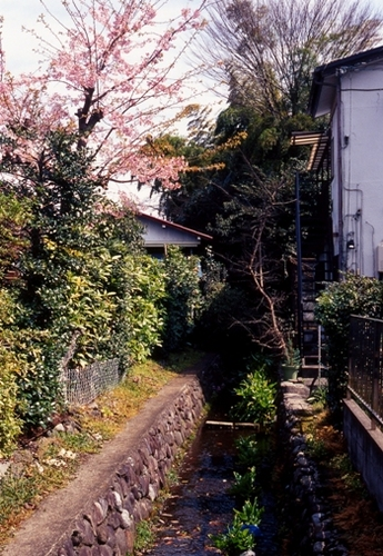 FWmusashinoRG437(1).jpg