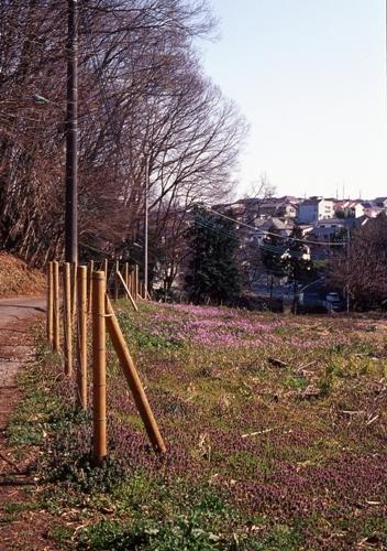 FWmusashinoRG453(1).jpg