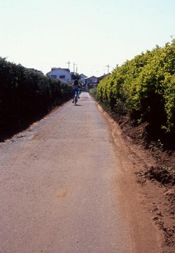 FWmusashinoRG482(1).jpg