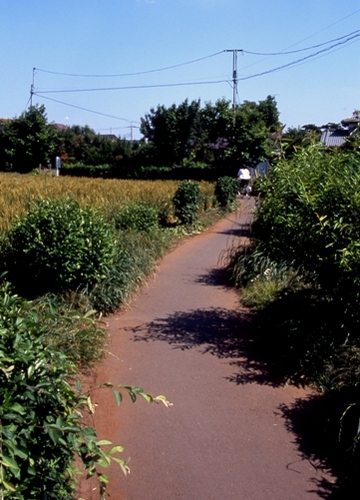 FWmusashinoRG518(1).jpg