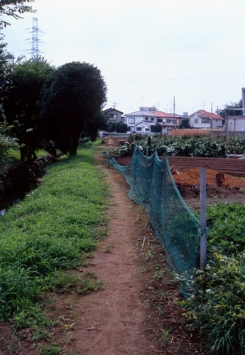 FWmusashinoRG677(2).jpg