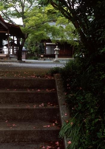 FWmusashinoRG724(1).jpg