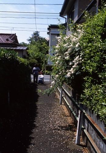 FWmusashinoRG795(1).jpg