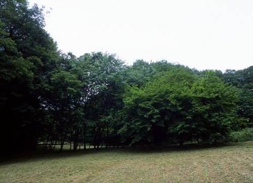 FWmusashinoRG835(1).jpg
