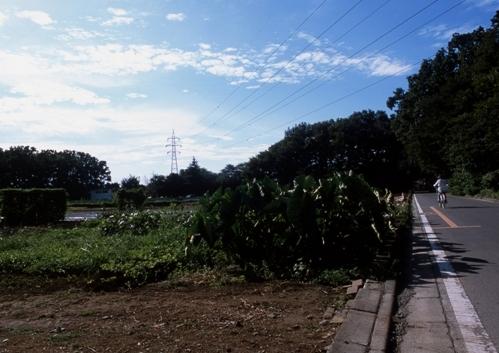 FWmusashinoRG890(1).jpg