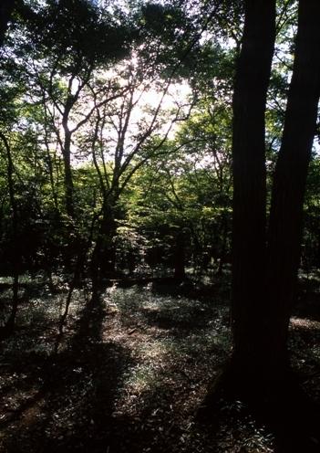 FWmusashinoRG892(1).jpg