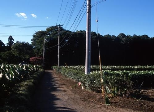 FWmusashinoRG927(1).jpg