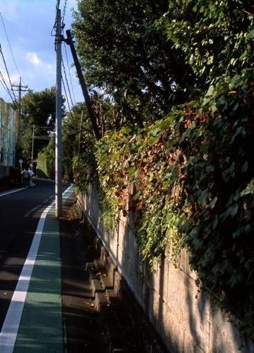 FWmusashinoRG953(1).jpg
