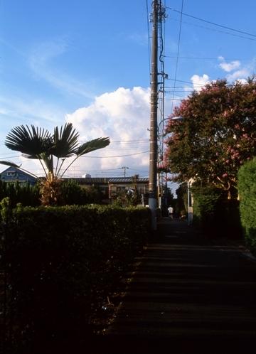 FWmusashinoRG957(1).jpg