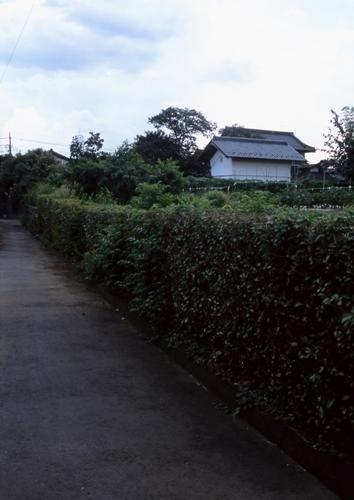 FWmusashinoRG971(1).jpg