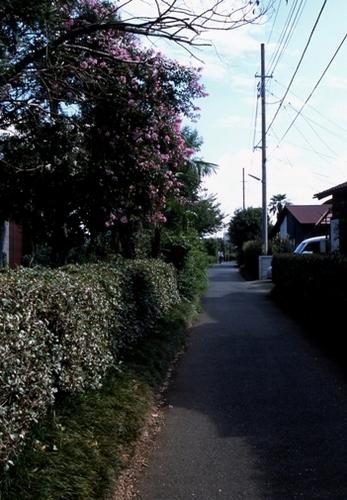 FWmusashinoRG989(1).jpg
