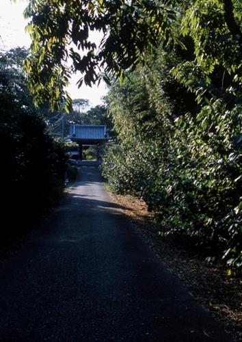 FWsakuraRG064(1).jpg