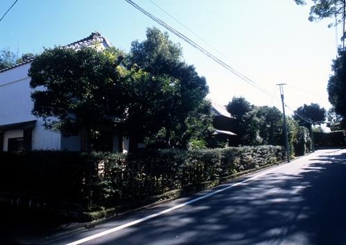 FWsakuraRG078(1).jpg