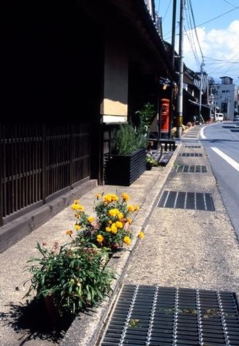FWsuzakaRG026(1).jpg