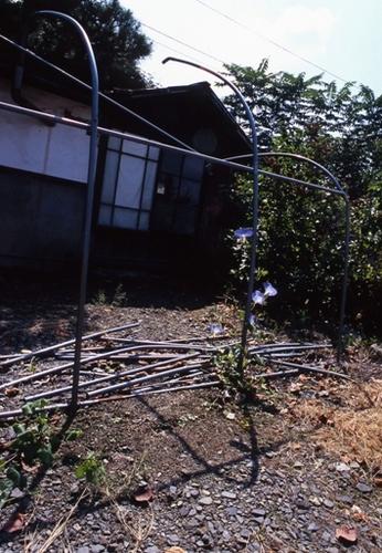 FWsuzakaRG037(2).jpg