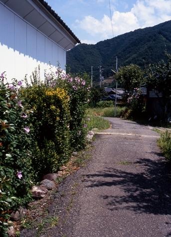 FWsuzakaRG070(1).jpg