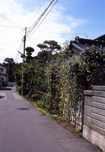 FWsuzakaRG122(1).jpg