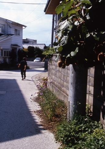 FWsuzakaRG134(1).jpg