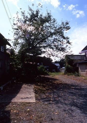 FWsuzakaRG138(1).jpg