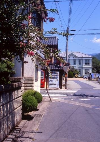 FWsuzakaRG199(1).jpg