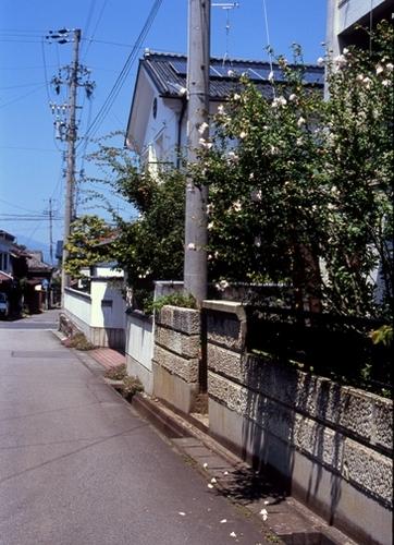 FWsuzakaRG200(1).jpg