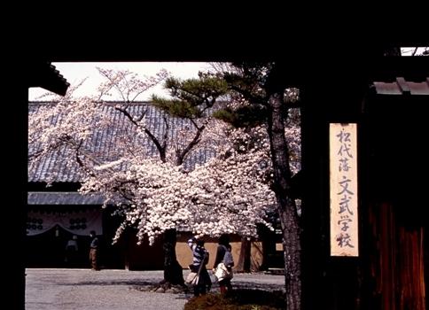 FWmatsushiroRG080(1).jpg