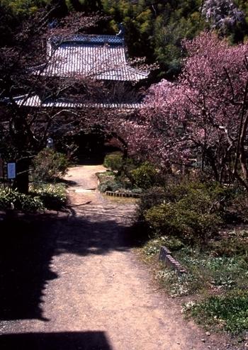 FWmatsushiroRG095(1).jpg