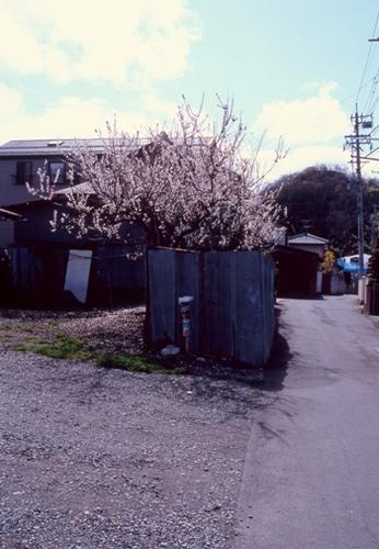 FWmatsushiroRG193(1).jpg