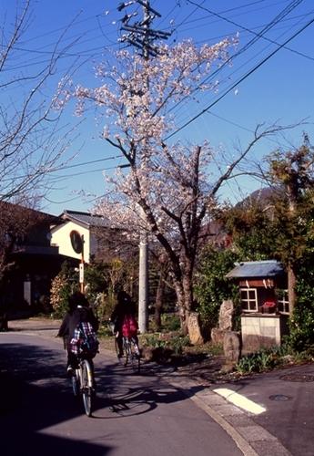 FWmatsushiroRG271(1).jpg
