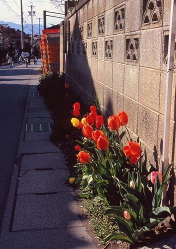 FWmatsushiroRG275(1).jpg